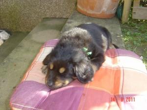 Bonny weiß: Schlafende Hunde soll man nicht wecken !!