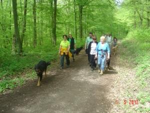 Ein Spaziergang durch den schönen Buchenwald macht Laune.