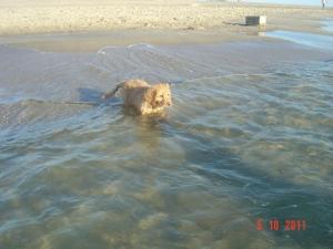 Ist ja gar nicht so schwer, ich kann ja schwimmen!