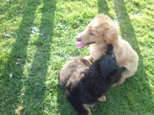 Am Liebsten rauften Briska und Bilbo zusammen.