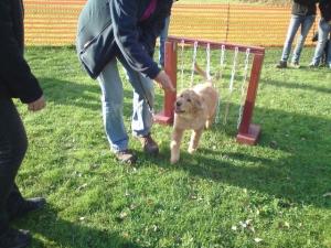 Dabei spielt eine vertrauensvolle Beziehung zwischen Hund und Frauchen eine wichtige Rolle.