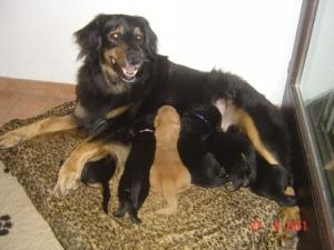 Asra zeigt sich von ihrer besten Seite. Sie ist eine tolle fürsorgliche Mutter.