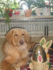Bilbo und der Osterhase!!!