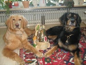 Mama Asra und Bilbo wünschen viele bunte Ostereier!!!