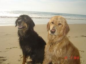 Asra und Bilbo sind in Lacanau Ocean am Atlantik.