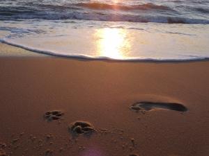 Asra´s  und Markus´s Spuren im Sand, Lacaneau Sommer 2014